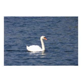 Swan Art Photo