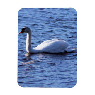 Swan Photo Rectangular Photo Magnet