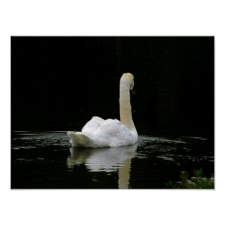 Swan Posters