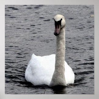 Swan. Poster