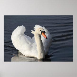 Swan Print