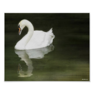 Swan Reflected Print