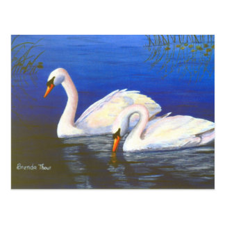 Swan Reflections Postcard