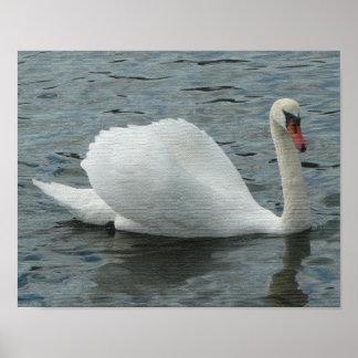 Swan Swimming Print
