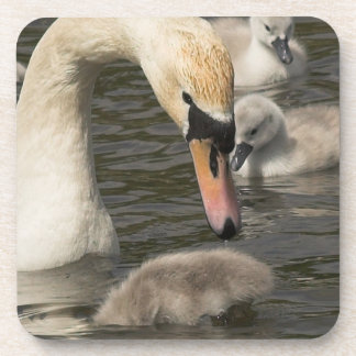 Swan with Cygnets Set of 6 Coasters