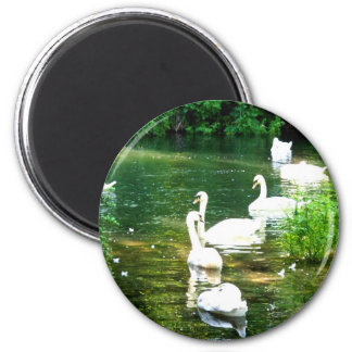 Swans 6 Cm Round Magnet