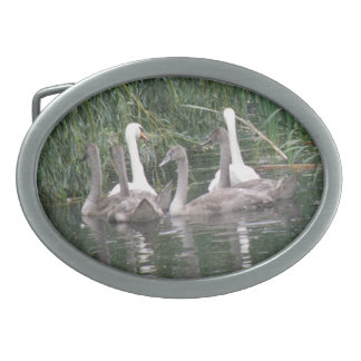 Swans and Cygnets Belt Buckle