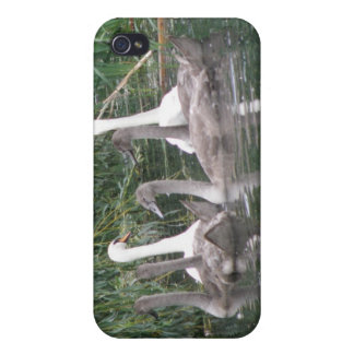 Swans and Cygnets  Case For iPhone 4