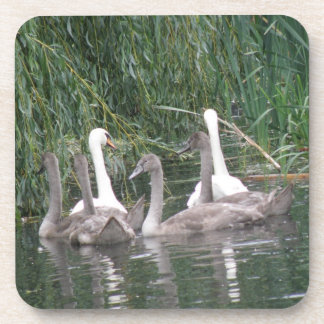 Swans and Cygnets Cork Coaster