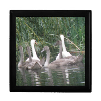 Swans and Cygnets Gift Box
