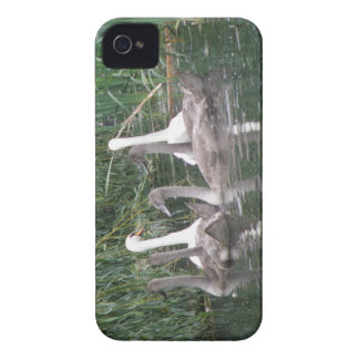 Swans and Cygnets iPhone Case