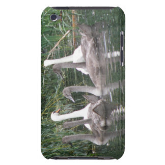 Swans and Cygnets iPod Case