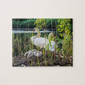 Swans and Cygnets Jigsaw Puzzle