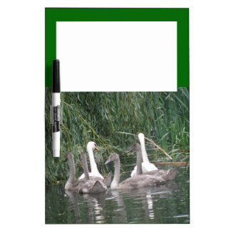 Swans and Cygnets Memo Board