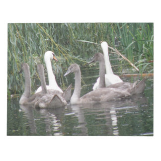 Swans and Cygnets Notepad