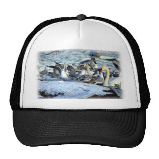 Swans and Seagulls in Winter Cap