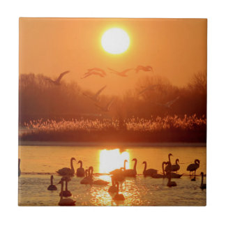Swans at Sunrise Tile