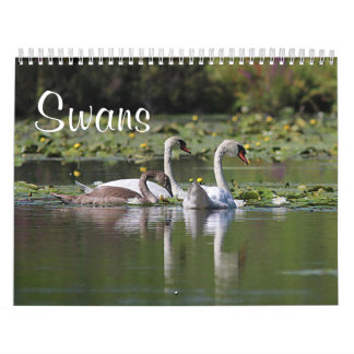 Swans Calendar