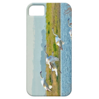 Swans coming in to land on a lake barely there iPhone 5 case