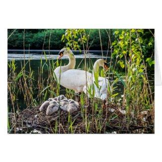 Swans & Cygnets Card