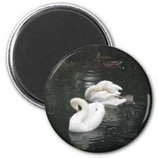 Swans Fridge Magnet
