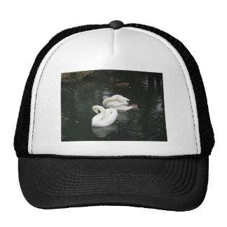 Swans Hat