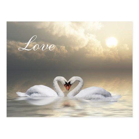 Swans heart postcard