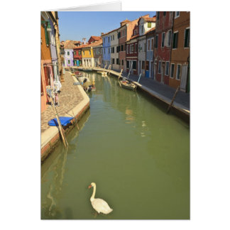 Swans in canal, Burano Island, Venice, Italy Card