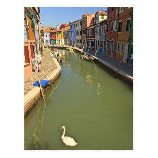 Swans in canal, Burano Island, Venice, Italy Postcard