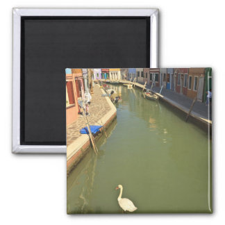 Swans in canal, Burano Island, Venice, Italy Square Magnet