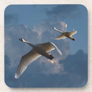 SWANS IN FLIGHT COASTER