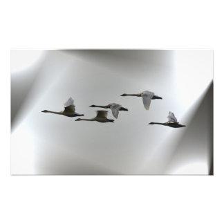 Swans in flight photo print