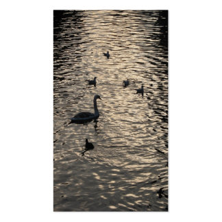 Swans in Lake Small Photo Card Pack Of Standard Business Cards