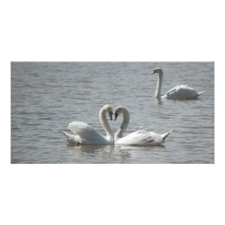 Swans in Love Photo Greeting Card