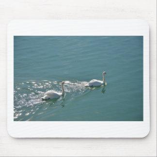 Swans In Sunlight Mousemat