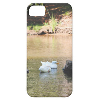 Swans iPhone 5 Cover