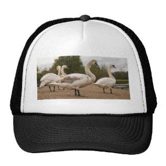 swans jpg trucker hat