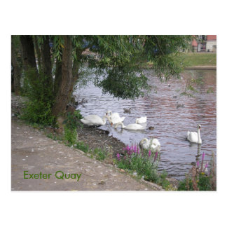 Swans On Exeter Quay Postcard