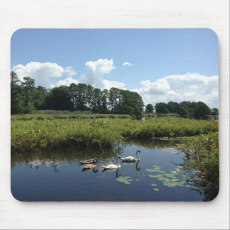 Swans on pond mouse pad
