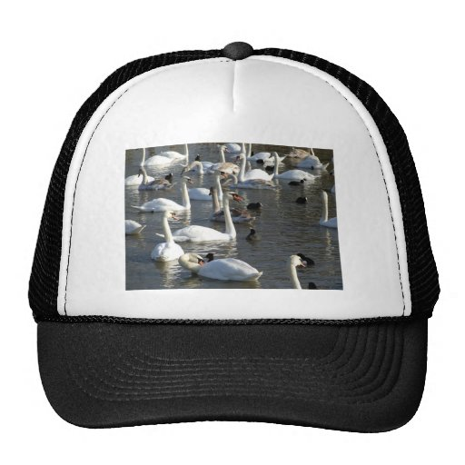 Swans on the Lake Hat
