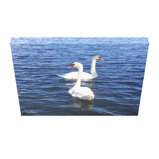 Swans on the Water Canvas Print