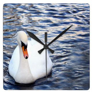 Swans on water clocks