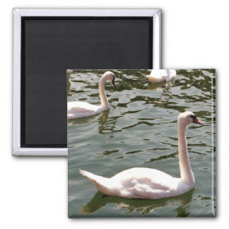 Swans on Water 2 Inch Square Magnet