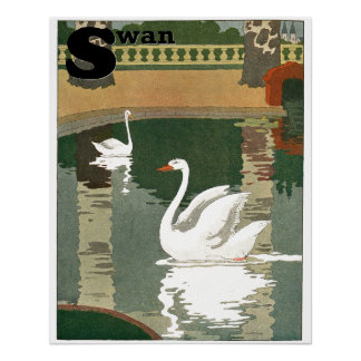 Swans Reflected in the Water Alphabet
