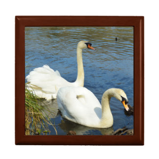 Swans Tehidy Country Park Cornwall England Gift Box