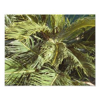 Swaying Palm Leaves Photo Print