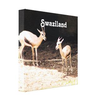 Swaziland Canvas Prints