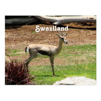 Swaziland Gazelle Postcard