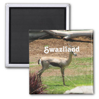 Swaziland Gazelle Square Magnet