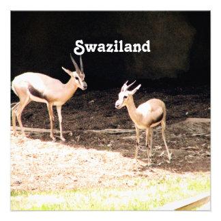 Swaziland Announcements
